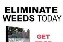 Weeds: eat, destroy, or embrace