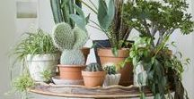 Indoor House Plants / Everything you need to know about growing indoor house plants. Decor inspiration, ideas, tips, tricks, and how-tos. | Fruits, vegetable's, herbs, flowers, cactuses, succulents, trees, shrubs, and seeds. | Bring the outdoor nature into your home!