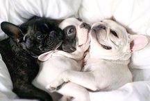 ♡ Puppy