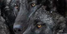 Dmitri & Vlad / oc board for big, fluffy and ferocious werewolf twins