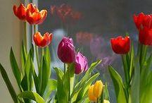 Fleurs - Jardin