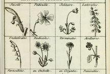 Zioła Herbs/Plants