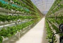 Hydroponics/aeroponics/aquaponics / Hydroponic farming ideas