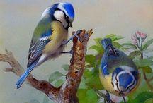 Bird paintigs