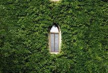 Green walls Zielone ściany