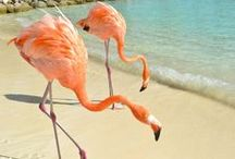 Their Curaçao is Yours / Curaçao door de ogen van anderen. Zij laten jou hun Curacao zien. Meer inspiratie voor jouw volgende reis naar Curaçao vind je op http://www.myworldisyours.nl