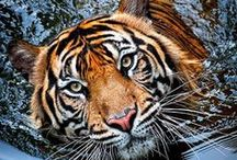 Wild Animals / Great photos of wild animals