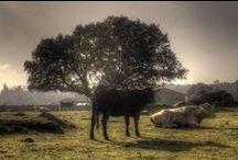 Animales Parque Nacional Sierra de Guadarrama / El Parque Nacional de la Sierra de Guadarrama alberga desde aves rapaces, hasta las entrañables cigüeñas, caballos, cabra ibérica, zorros y pequeños animales, que hacen que sea una de las zonas de fauna más ricas de la Comunidad de Madrid.