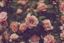 ||Roses|||Róże||