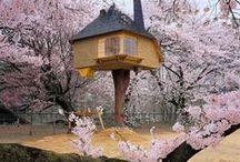 Casa na árvore / Quem nunca sonhou em ter uma casa na árvore?!