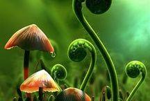 Moodboard: Forest Dweller