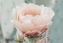 ∞ Moodboard: Rosa