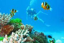 My Under Water World is Yours / Dat is het mooie van duiken: je bent even getuige van een wereld waar je normaal geen weet van hebt. In het geval van het Great Barrier Reef is het ecosysteem zo groot, dat je het vanuit de ruimte kunt zien. Toch geef ik de voorkeur aan een bezichtiging vanuit het zoute zeewater. Stel je voor dat je de zwevende schildpadden, de doorzichtige kwallen, de snelle haaien, de vrolijke clownsvisjes en, ergens verborgen tussen een muur van gekleurd koraal, een fotogenieke zeeanemoon moet missen.