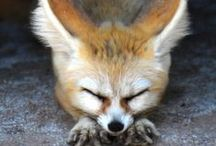 Tucson Desert Wildlife / We have some amazingly stunning wildlife here in Tucson.