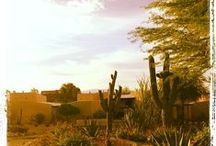 Be Our Guest / Highlighting our wonderful guests who stay with us at Westward Look Resort and Spa located  in Tucson, Arizona.