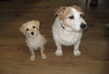 Honden / Huisdieren