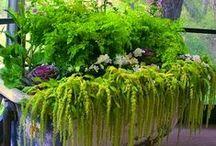 Container gardening / Wildly decorative container gardening.