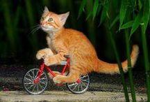 WIJ ♥ GRAPPIGE PLAATJES / Een beetje humor op zijn tijd is belangrijk! Geniet van de grappigste wandel en fietsplaatjes!
