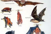 Batty for Bats / Bats are wonderful creatures
