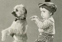 Vintage animal cards