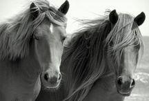 Konie: Pa-ta-taj / Przeciętna długość życia koni wynosi 25-30 lat.
