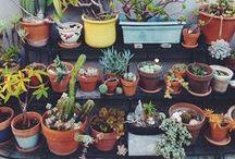 Jardin ♢