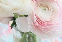 FLOWERS | RANUNCULUS