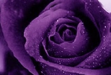 ✿⊱╮  PURPLE  ✿⊱╮ / Purple has been used to symbolize magic and mystery, as well as royalty. Being the combination of red and blue, the warmest and coolest colors, purple is believed to be the ideal color. Most children love the color purple. Purple is the color most favored by artists.