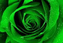 ✿⊱╮ GREEN  ✿⊱╮ / Green is defined as a color between blue and yellow on the color spectrum