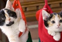 ✿⊱╮XMAS KITTIES ✿⊱╮