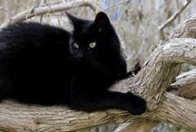 "✿⊱╮BLACK CATS✿⊱╮ / ""A black cat crossing your path signifies that the animal is going somewhere."""
