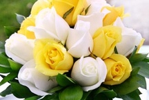 ✿⊱╮YELLOW & WHITE✿⊱╮