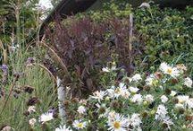 io e il mio giardino / tra spighe e fiori