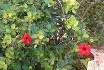 my flora / my flora