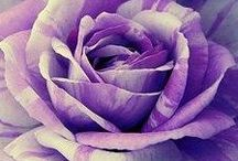 ✿⊱╮PURPLE & WHITE✿⊱╮