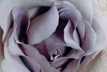 SHADES OF MAUVE / Mauve is a pale lavender-lilac color, one of many in the range of purples.
