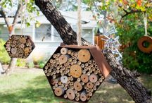 Bees / Australian Native Bees