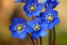 Flowers / by Brooke Blake