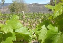 Spring 2013 Chardonnay