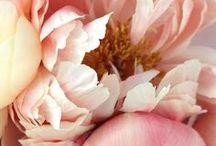 my flowers....