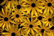 Yellow / Amarelo. Amo esta cor!