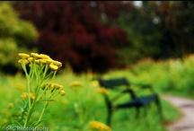 Landscape & Nature Photography / Landscape / Nature Photos