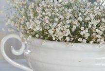 White bliss / Love white!!! / by Rita Blanchard
