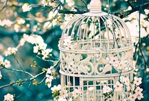 Dream Garden - Moodboard