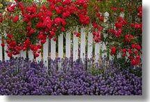 *White Picket Fence*