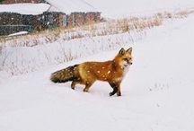 Winter /    / by Regina George