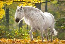 horses / najkrajšie zviera na svete
