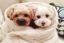 Dawgie Dawgs / Very Very Cute Dogs / by Jessica