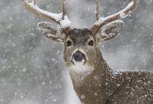 Christmas~Winter