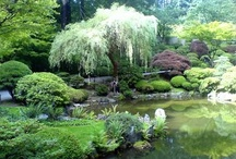 Japanese garden / by Nancy Hediger